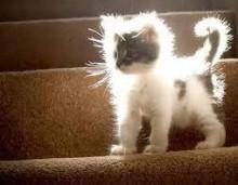 静電気ネコ
